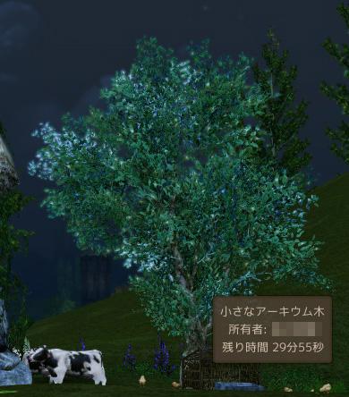 小さなアーキウムの木